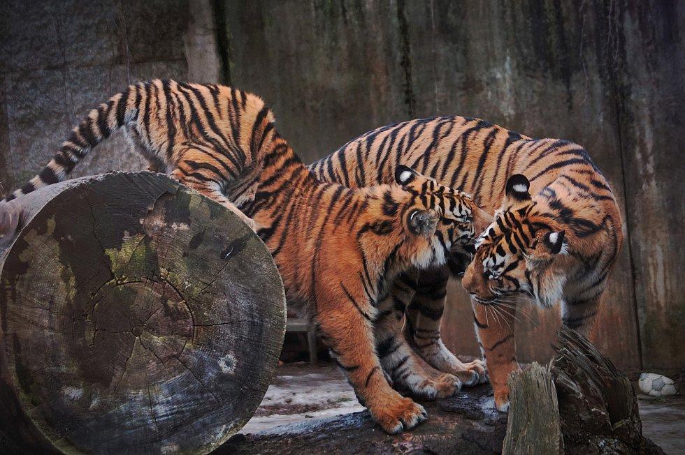 Zvířata v jihlavské zoo.