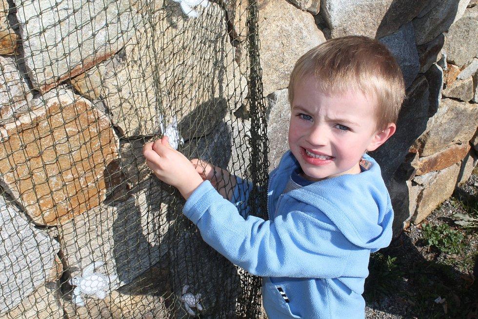 Jihlavská zoo návštěvníkům přiblížila, proč je důležité chránit mořské želvy.