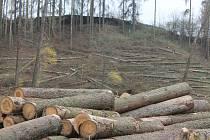 Kůrovcová kalamita se nevyhnula ani Luám nad Jihlavou, městys ale plánuje začít co nejdříve s obnovu lesů.