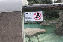 U tuleňů v jihlavské zoologické zahradě se po incidentech objevily cedulky s upozorněním, že zvířata koušou.
