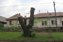 Z pahýlu, který zůstal po kácení v centru Příseky, bude zajímavý poutač pozornosti pro lidi. Občané sami mohou rozhodnout, jakou sochu ze zbytku stromu chtějí.