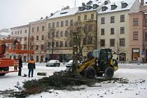 Tříkrálová likvidace vánočního stromu na jihlavském Masarykově náměstí