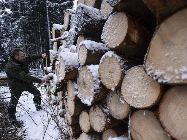 Kůrovcová kalamita způsobuje přetlak na trhu dříví.Na snímku je dřevo vytěžené v jihlavských městských lesích u Stonařova.