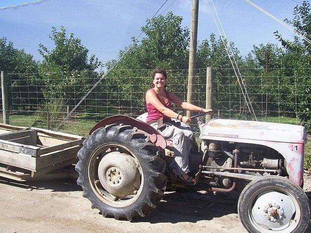 """""""Nový Zéland by se dal rozčlenit na regiony různých plodů. Několik desítek kilometrů jsou třeba jenom vinice, dále pak třešně nebo kiwi,"""" řekla Hana Davidová. Ta si zkusila nejen sběr těchto plodů, ale naučila se jezdit i s traktorem."""