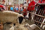 Ovce s jehňátkem připomínala blížící se Velikonce.