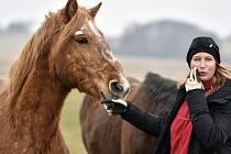O týrané koně v Kochánově se starají dobrovolníci..