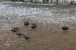 Během návštěvy Rantířova začalo sněžit, třebaže kalendář ukazoval šestého dubna.
