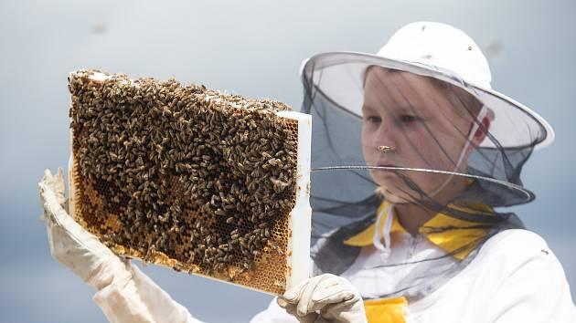 Včelaři na Vysočině.