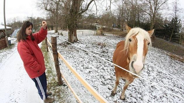 Koně z Ranče u Zelené sedmy v Čížově zabil fosfid hliníku.