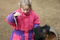 První jarní sluníčko přilákalo do jihlavská zoologické zahrady desítky rodin s malými dětmi.