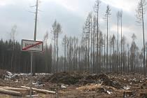 Lesy jsou mna mnoha místech v kraji zničené po kůrovcové kalamitě. A tím se překupníci ohánějí.