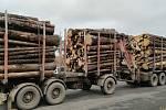 Řidiče kamionů se dřevem policie kontroluje pravidelně.