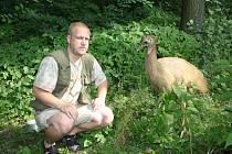 Jan Vašák s jedním z nových obyvatel zoo, asi rok starým kasuárem přilbovým, který je v Jihlavě od loňských Vánoc. Přijel z izraelské zoo Gangaroo. Jeho domovinou je severní Austrálie a Nová Guinea.