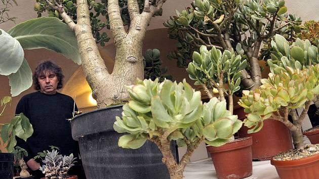 Výstavu kaktusů a sukulentů pořádají jihlavští kaktusáři v prostorách Muzea Vysočiny.