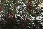 V pátek 20. listopadu pocukrovala letošní první dávka sněhu Vysočinu.
