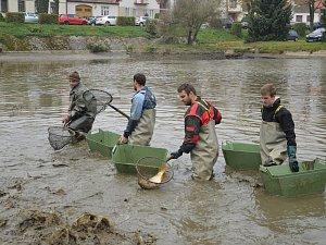 Kapři a amuři uvízli v sobotu v rybářských sítích v Sedlejově u Telče.