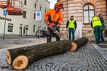 Lípy musely být pokáceny, padaly z nich totiž velké větve.