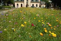 Letničky.Záhony kvetou například v areálu hřbitova.