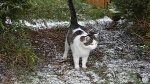 Na Vysočině začal padat sníh