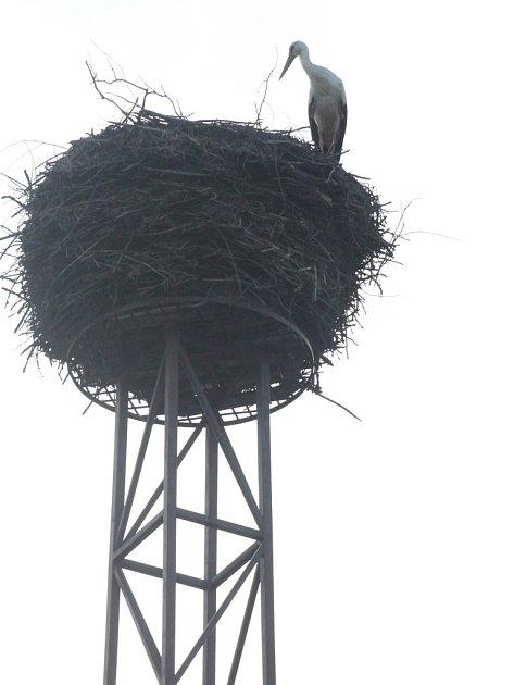 Vyhlíží. Čáp ve Stonařově vyhlíží svou družku. Na hnízdě místního zemědělského družstva se poprvé objevil toto úterý 12. dubna.