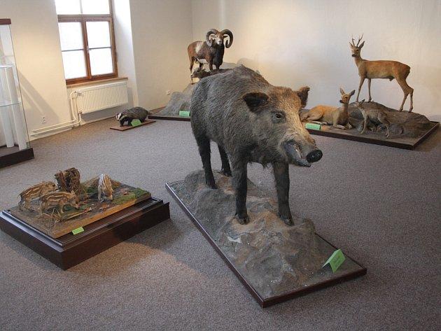 Stávající přírodovědné expozice budou nahrazeny novými, zaměřenými na jednotlivé biotopy, jako je les nebo louka. Hotové budou do konce letošního roku.