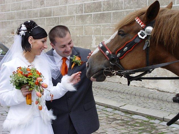 Novomanželé Pechovi si kobylky před cestou na hostinu pohladili.