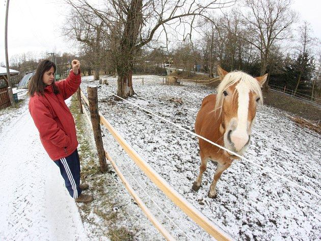Renáta Deutscharová z Ranče u Zelené sedmy na prosincovém snímku s koněm, který přežil útok traviče. Dalších pět koní však takové štěstí nemělo.