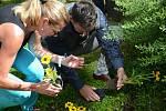 Sázení slunečnic se v Jihlavě letos konalo už počtvrté.