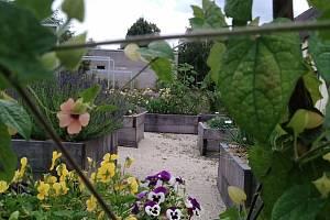V plném rozpuku. V Panském dvoře v Telči návštěvníci najdou bylinkovou zahrádku. Ta v těchto dnech hýří všemi barvami.