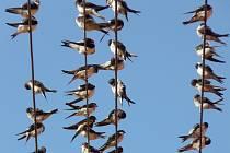 Ptáci se začínají houfovat na drátech.