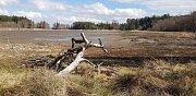 Vypuštěný Velký Pařezitý rybník vysychá.