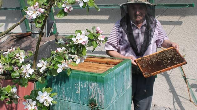 Do úlu s krátkými rukávy. Jaroslav Hájek se žihadel od včel nebojí, nikdy po nich prý neoteče.