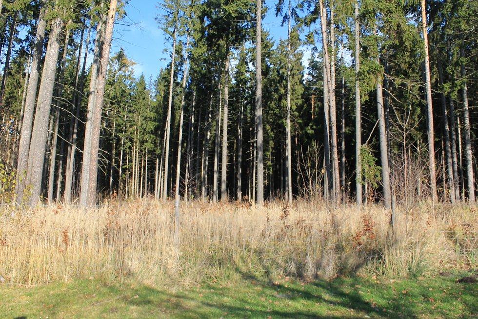 Les nejen v okolí rybníka budou muset nechat vykácet, aby se osada mohla rozrůst.