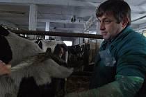 Na nedostatek práce si ledečský veterinář Pavel Vrbka rozhodně nestěžuje. Každý den tráví se svými zvířecími pacienty několik hodin, a to nejen v teple své ordinace. Vyráží také do terénu.