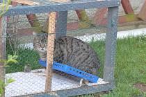 Kočka chycená do pasti se vrátila majitelům v pořádku