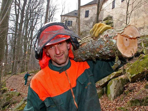 Kácení nebezpečných stromů v blízkosti hradu Roštejna.