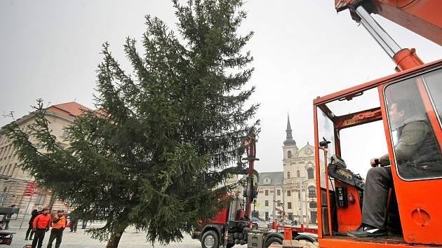 Vánoční strom, který od včerejšího rána stojí v horní části jihlavského Masarykova náměstí, rostl u panelového domu číslo osmnáct na sídlišti Demlova, kde už vadil. Jeho větve narážely do oken a fasády.