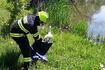 Záchrana čápa v Dobroníně.