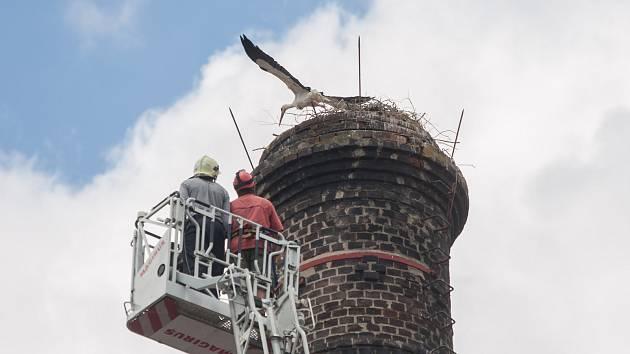 Kroužkování čápů na komíně v areálu Služeb města Jihlavy v Havlíčkově ulici.
