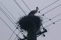 V týdnu se čáp objevil na sloupu elektrického vedení v Hodicích.