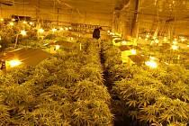 Policisté v Třebíči zneškodnili velkopěstírnu marihuany, jednu z největších u nás. V srpnu si skladiště v areálu bývalé prodejny pronajali Vietnamci. Nyní absolvují výslechy a čeká je vazba. Mohou vyfasovat až deset let za mřížemi.