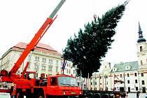Na jihlavském Masarykově náměstí včera ráno levitoval vánoční strom. Slavnostně se společně s vánoční výzdobou v ulicích města rozsvítí tuto neděli v 16.45.