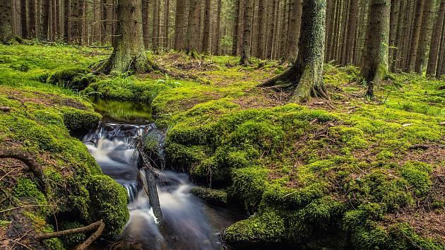 První místo ve fotosoutěži obsadil snímek Lesní potůček od Pavla Slavíčka.