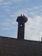 Polenský pár. V Polné se dočkali. Čapí pár se usídlil na nepoužívaném komíně škrobárny.