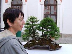 Výstava bonsají a kamenů suiseki v jihlavském hotelu Gustav Mahler