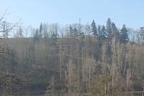 I u Malého Beranova mizí lesy kvůli kůrovcové kalamitě.