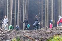 Sázení stromků v Sovovce.