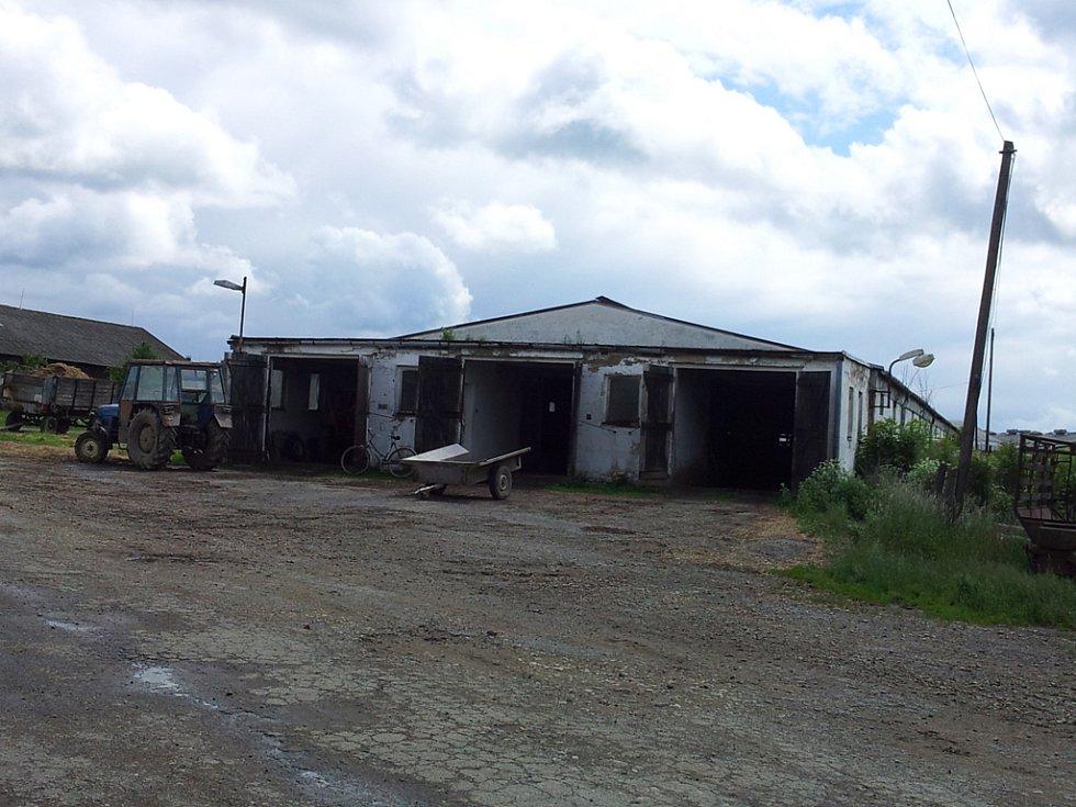 V zemědělském družstvu v Krasonicích na Jihlavsku včera ráno zabil rozzuřený býk ošetřovatele.
