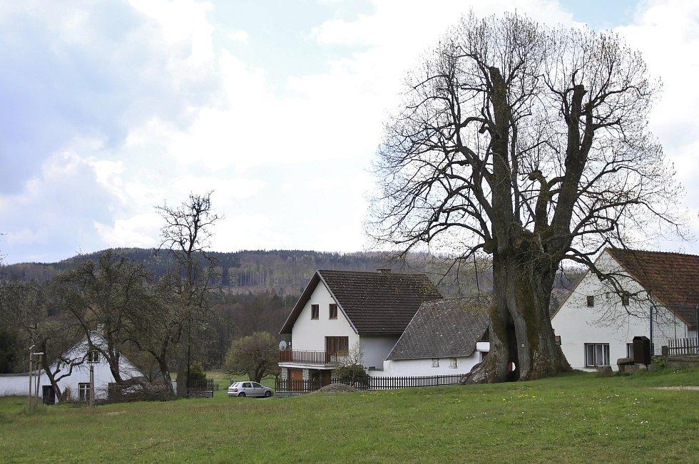 Památná lípa v Praskolesích, místní části Mrákotína.