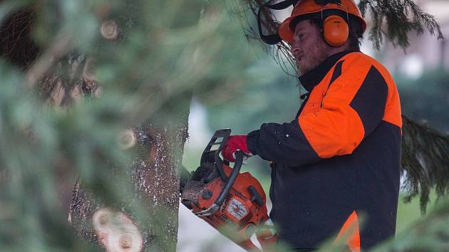 Kácení vánočního stromu pro Masarykovo náměstí v Jihlavě.